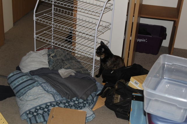 closet-cat inspection